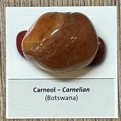 Edelstein - Trommelstein - Carneol / Karneol/ Chalcedon rot - ca. 25-35mm