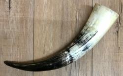 Trinkhorn - aussen poliert, innen lackiert - lebensmittelecht - ca. 0,5l